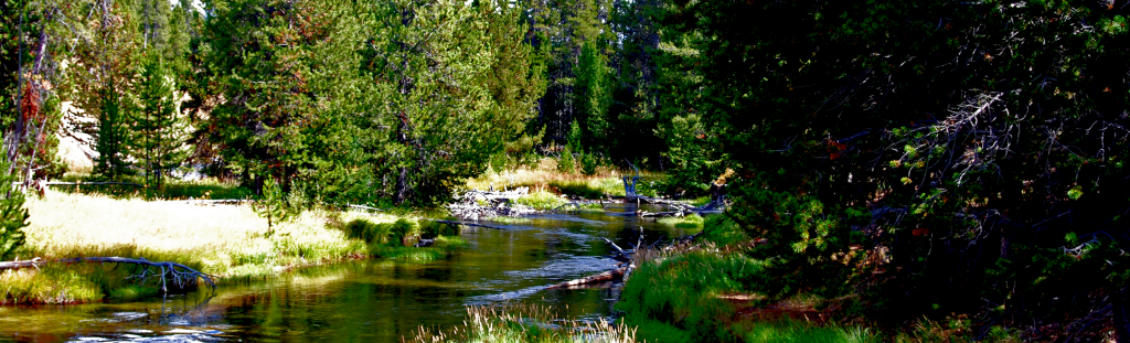 Mountain stream in Yellowstone